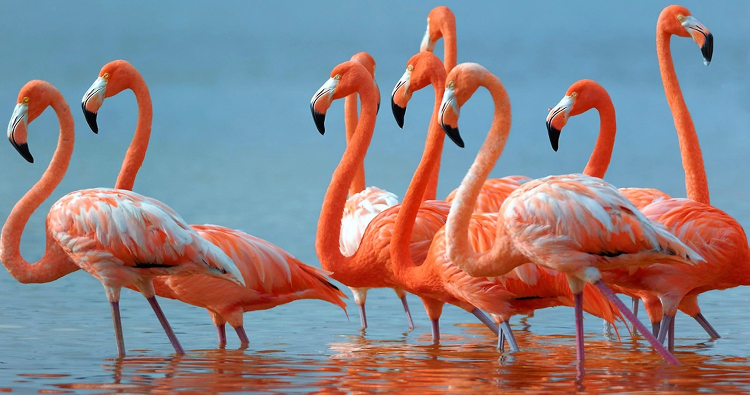 9 flamingos standing in eater
